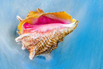 Seashell in the Waves - Free image #451067