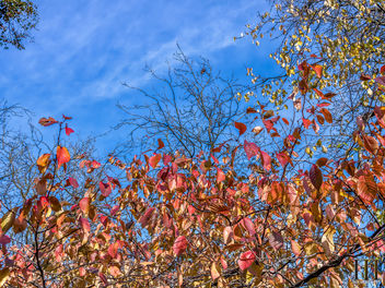 Autumn Leaves - Free image #451167