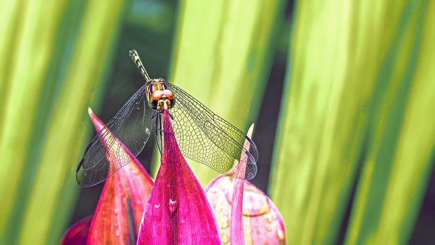 Dragonfly - Free image #451177