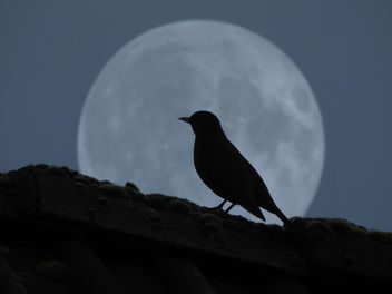 the bird in the moon - Kostenloses image #451517