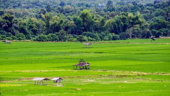 #nature, landscape, fields rice, chomthong ,chiang mai, asia, thailand - Free image #452387