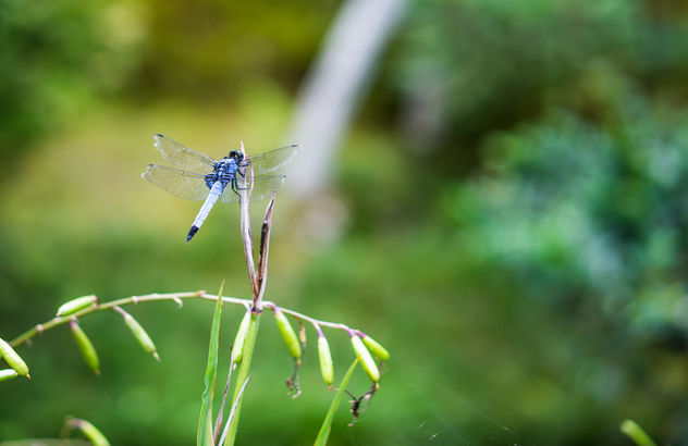 Dragonfly - Free image #452657