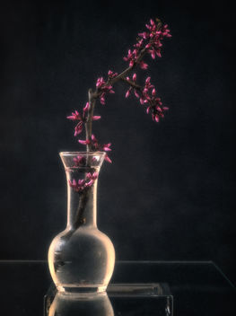 Still life with redbud - image #452977 gratis