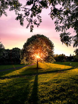 Sunset in the park - Dublin, Ireland - Landscape photography - Free image #454007