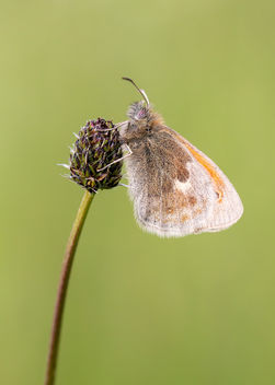 Small Heath - image gratuit #454057