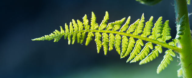 Cold Fern - Kostenloses image #454147