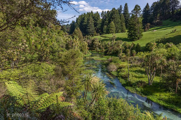 The Blue Spring at Te Waihou - бесплатный image #454317