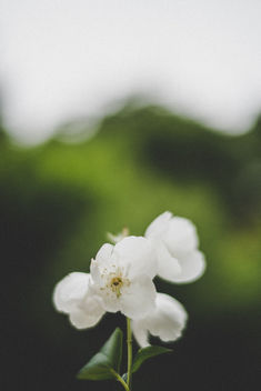 White and green - image gratuit #454547