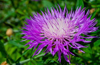 #flower #macro #nature #purple #pink #flora - image #454557 gratis