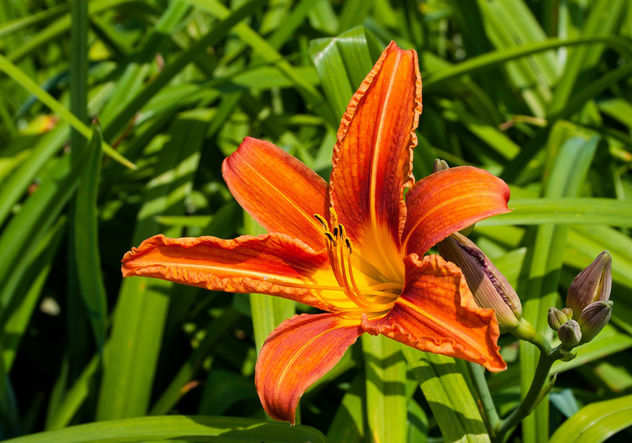 #lily #flower #macro #nature #orange #flora - Free image #454927
