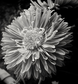 Black and white beauty - image #455077 gratis