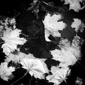 Leaves - image gratuit #455357