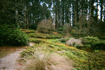 National Rhododendron Gardens in winter - image #455447 gratis