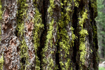 Green moss on tree bark.jpg - image #455477 gratis