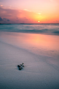 Sunset on the beach - Maldives - Travel photography - бесплатный image #455527