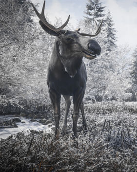 TheHunter: Call of the Wild / Hello Mr. Moose (Alt) - Free image #456107
