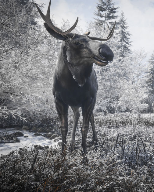 TheHunter: Call of the Wild / Hello Mr. Moose (Alt) - бесплатный image #456107