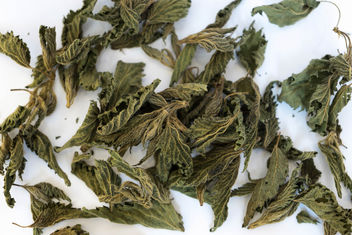 Close Up on Dry Nettle Leaves on the White Background - бесплатный image #456377