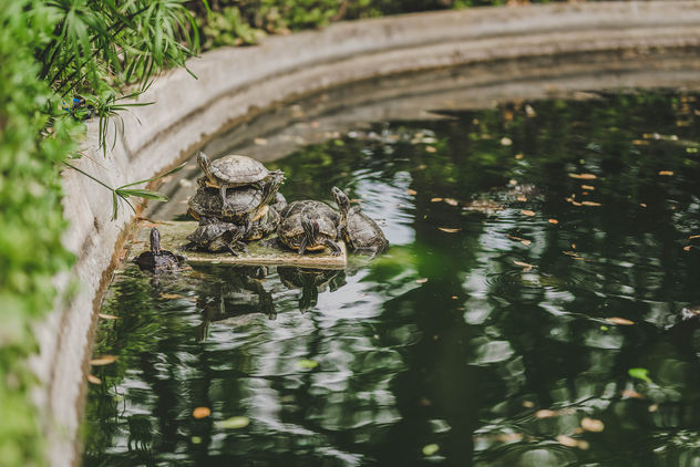 Funny Turtles Sitting On Fontaine.jpg - image gratuit #456527