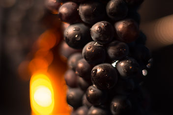 Grapes - Kostenloses image #456537