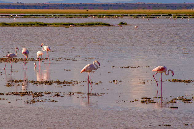 Lesser Flamingos, Lake Amboseli - бесплатный image #456607