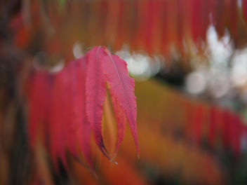 Colorful leaves - image #456657 gratis
