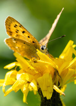 Butterfly after lunch - image gratuit #457517