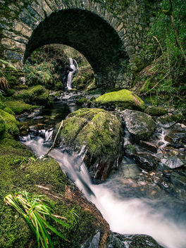 Tollymore Forest Park - United Kingdom - Landscape photography - бесплатный image #458107