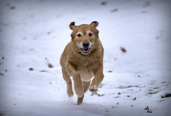 Dashing through the Snow - Free image #458557