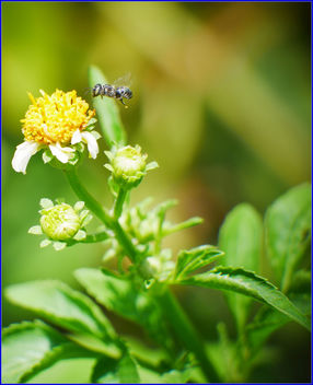 flower and pollinator - Kostenloses image #459397