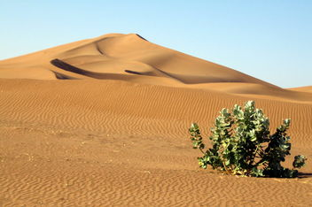 Lonely plant in the desert - image #460157 gratis