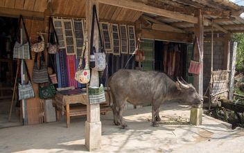 Buffalo in the Village Sapa .CR2 - image gratuit #460327