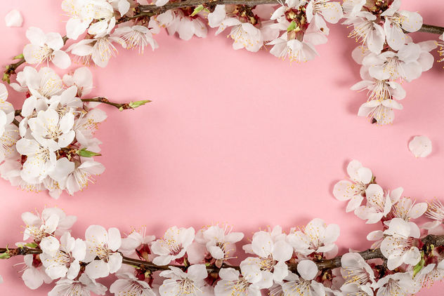 Spring pink background with flowering apricot branches - image gratuit #460487