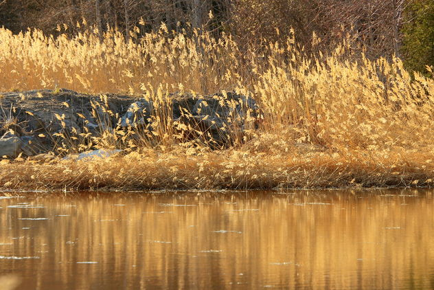 The bed of reeds - Free image #461307