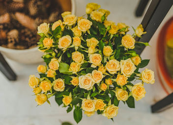 Small Yellow Roses (Flip 2019) - image gratuit #461857