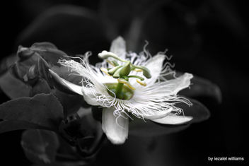 Passion star unit by iezalel williams IMG_5792-004 - Canon EOS 700D - Kostenloses image #461927