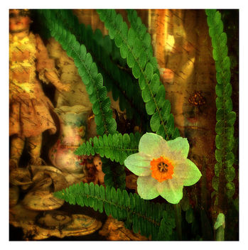 Flower and Ferns - image gratuit #462417