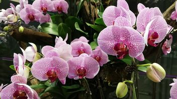 orchids - Free image #462587