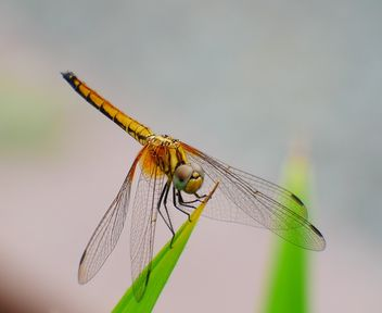 dragonfly - Free image #462967