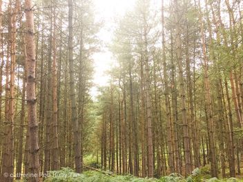 Birches valley, Cannock, England - Free image #463527