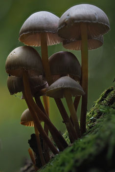 Mushrooms - image gratuit #464677