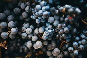 Background of a black grapes in a box - image #464837 gratis