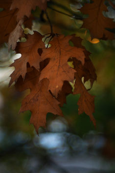 Autumn leaves - Free image #465097