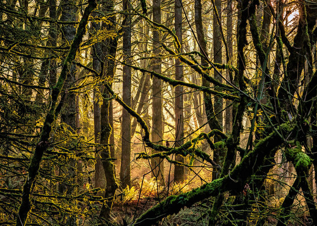 Morning sun in the woods - image #467617 gratis
