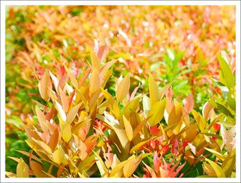 colorful new leaves - image #471807 gratis