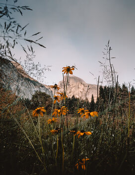Half Dome, Flowers, and a Dragonfy - Free image #472957